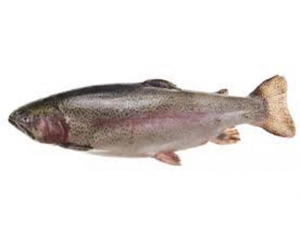 Pstruh lososovitý (váhove možnosti 1000 g)