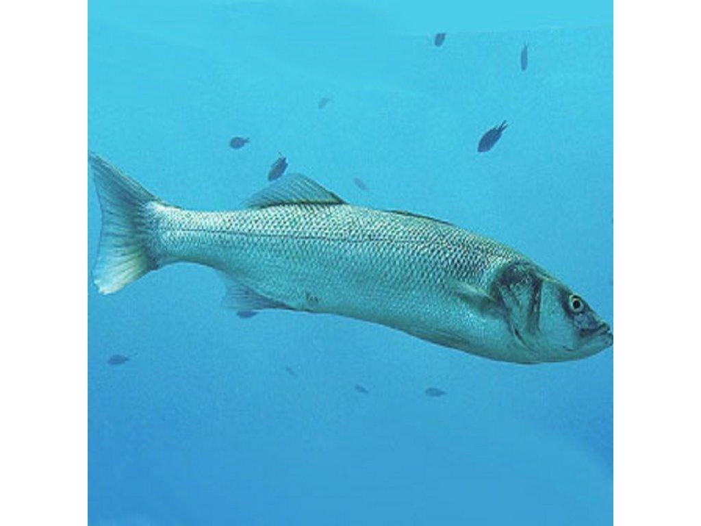 Morský vlk lovený (váhove možnosti 800 g, čistenie ryby nechcem rybu vyčistiť)