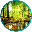 Fototapeta příroda