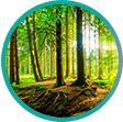 Samolepicí fototapeta les