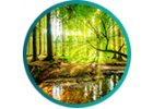 Samolepicí fototapeta příroda