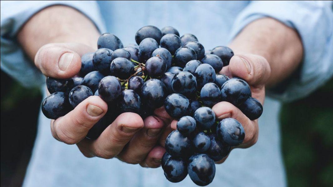 Boříme mýty o víně