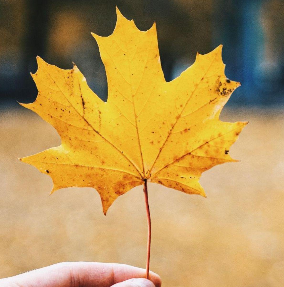 Ochutnejte barvy podzimu!