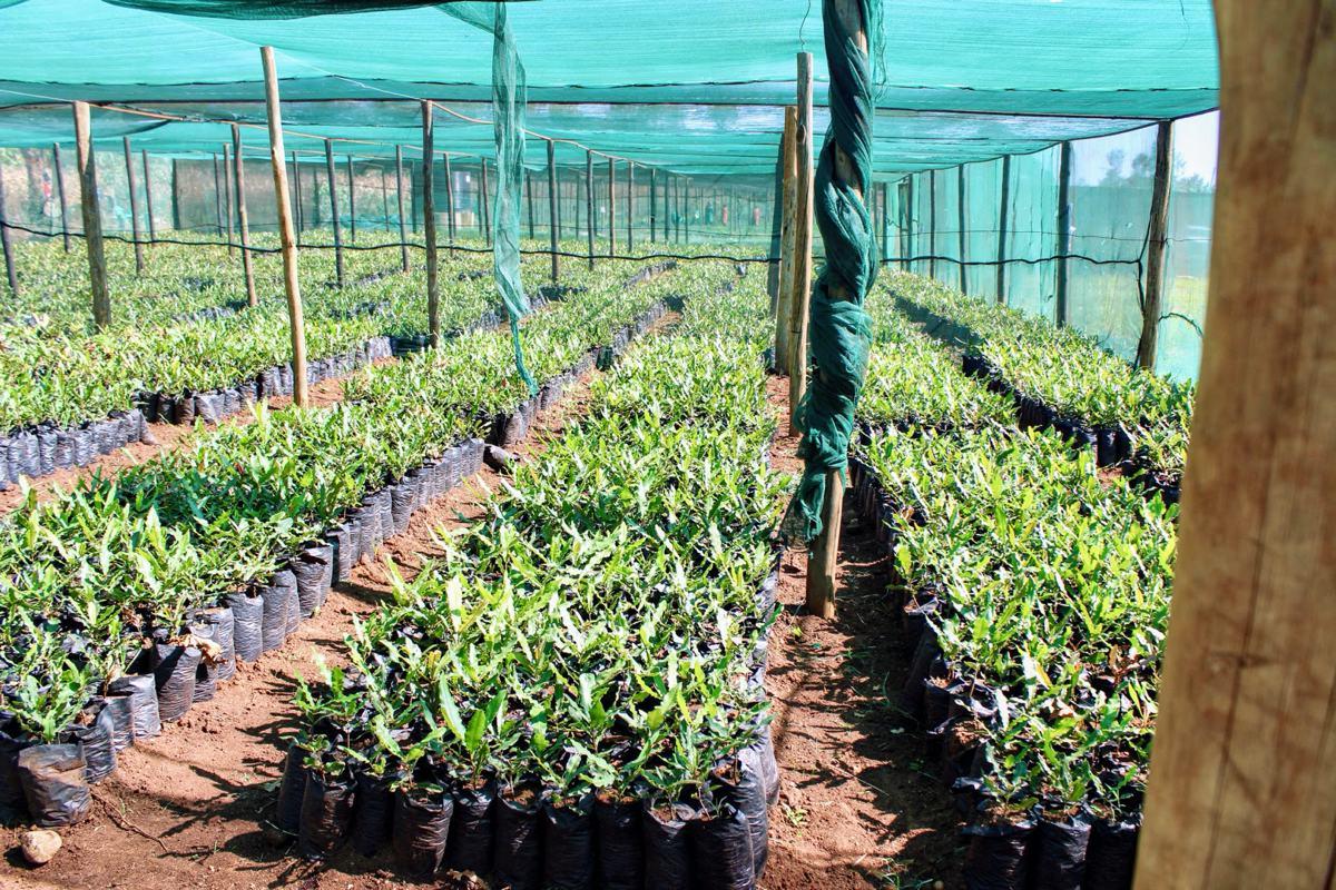 Vaše nákupy podporujú výsadbu úžitkových stromov