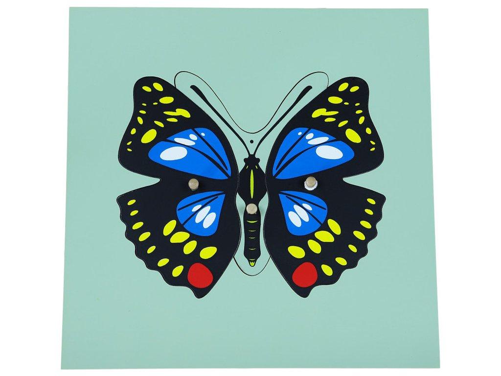 Puzzle - motýl