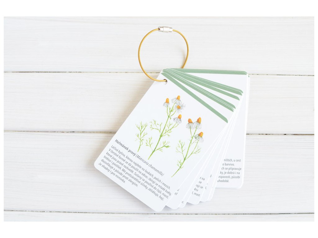 karticky rostliny