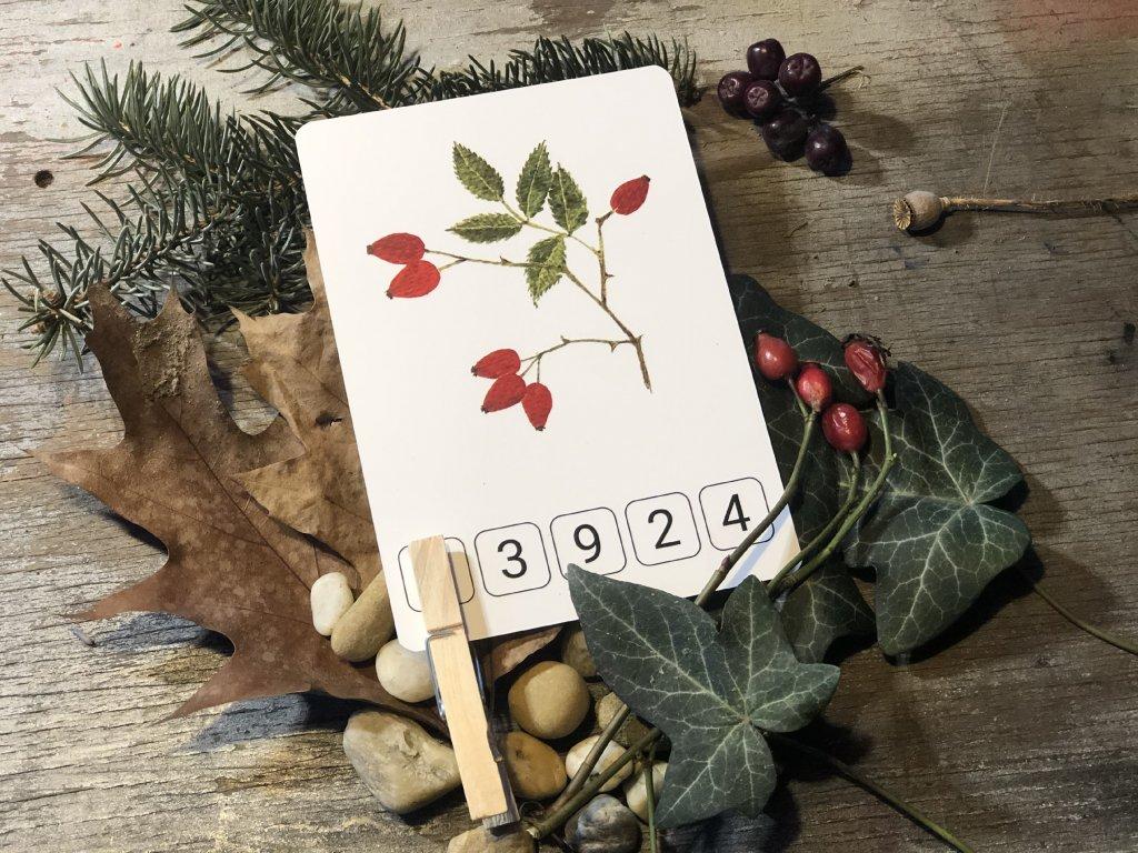 početní karty PODZIMNÍ PLODY - LES