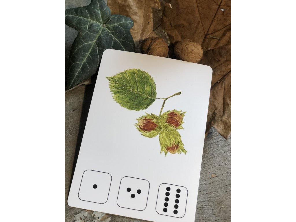 Početní karty s puntíky PODZIMNÍ PLODY - LES