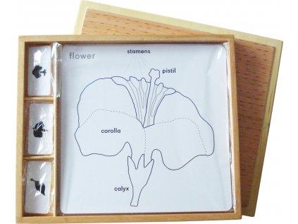 Sada aktivit k botanickým puzzle (popisky v ANJ)