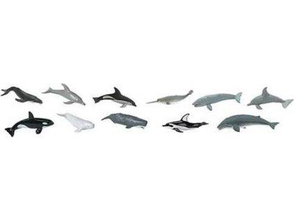 Tuba - Velryby a delfíni
