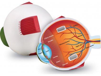 Pěnový model oka