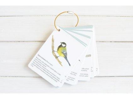 karticky ptaci3