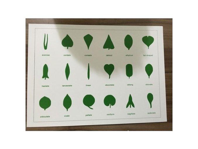 Tvary listů (karta)