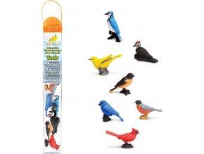 Tuba - Ptáci