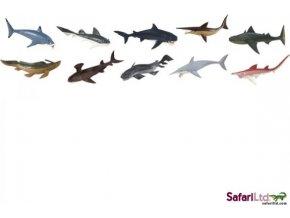 Tuba - Prehistoričtí žraloci