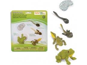 Životní cyklus - Žába