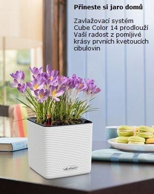 Cube Color 14 krokusy