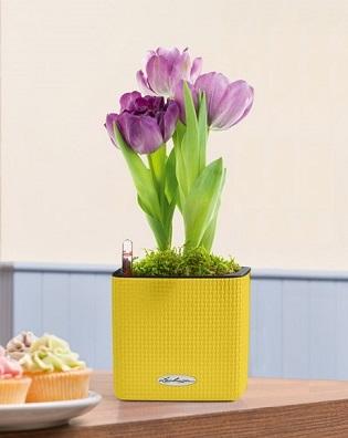 Cube Color 14 tulipány
