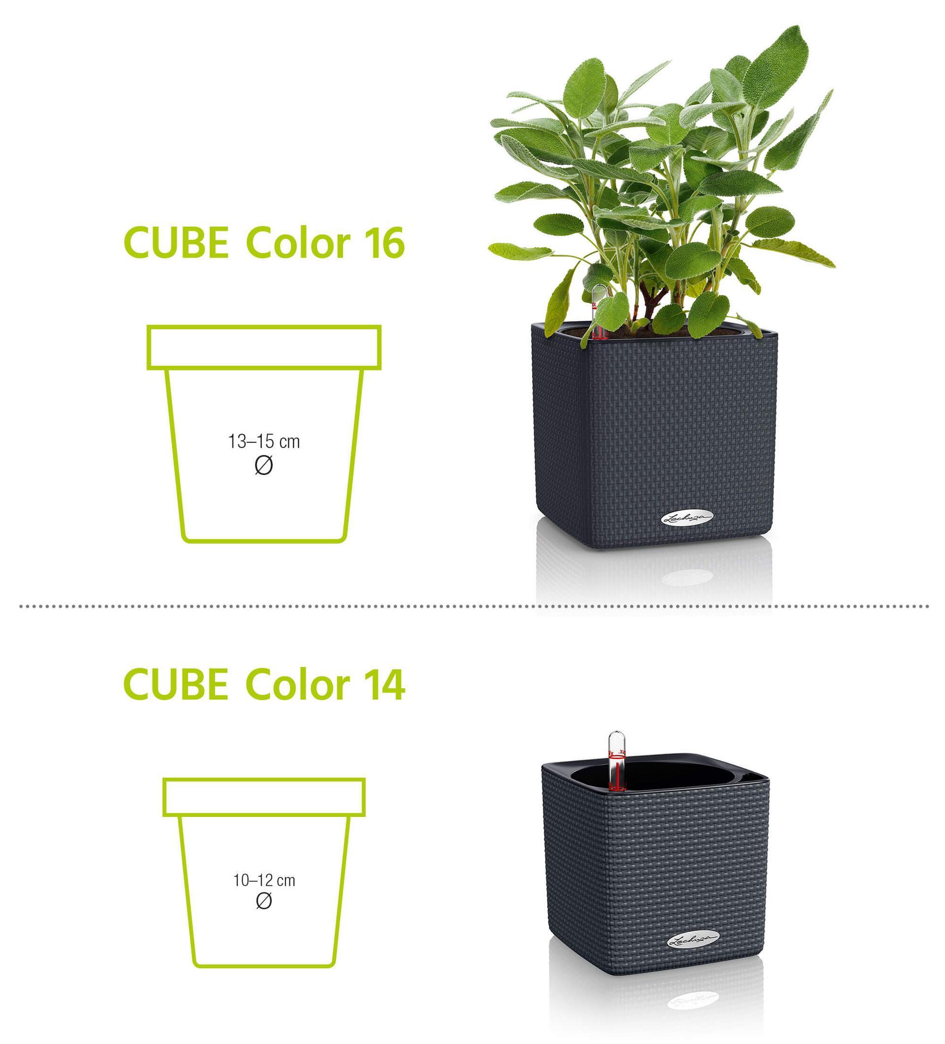 Cube Color velikosti