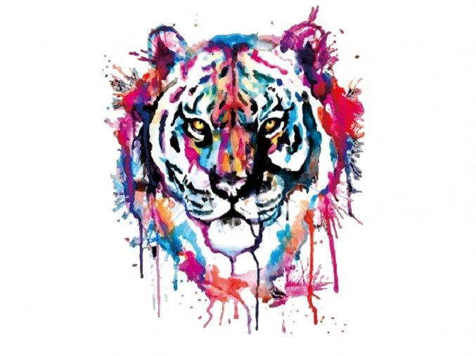 tygr duhový