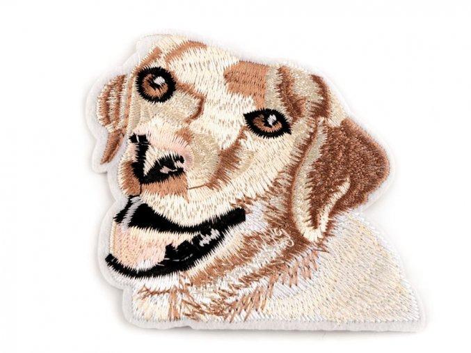 nažehlovačka labrador