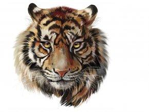 tygr velký ok