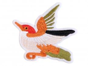 nažehlovačka kolibřík