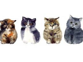 sedící kočky v řadě