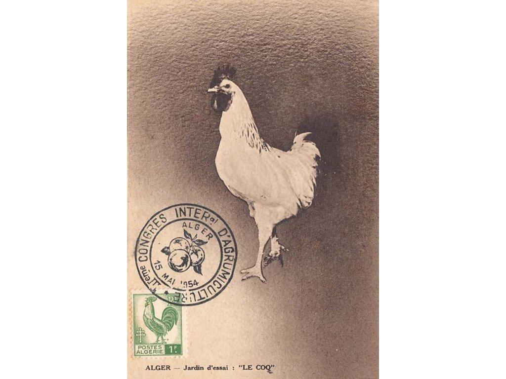 Alžír, 1954, Carte Maxima, pohlednice, prošlé, stopy stáří