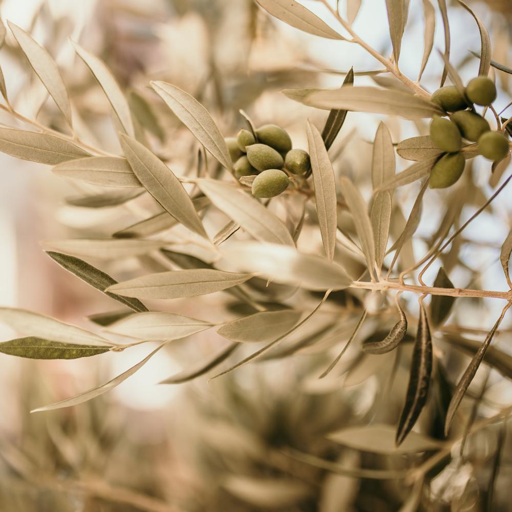 Panenský olivový olej, tj. olivový olej, který nebyl rafinovaný nebo průmyslově zpracovaný, má silný antioxidační účinek, chrání před poškozením volnými radikály a proti tvorbě rakoviny.