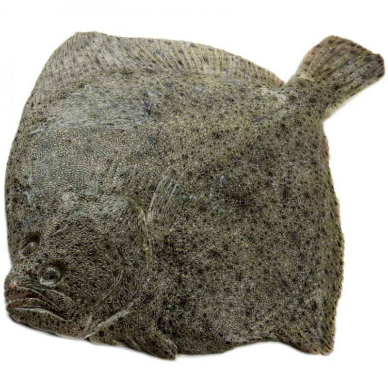 Mořské Ryby cele