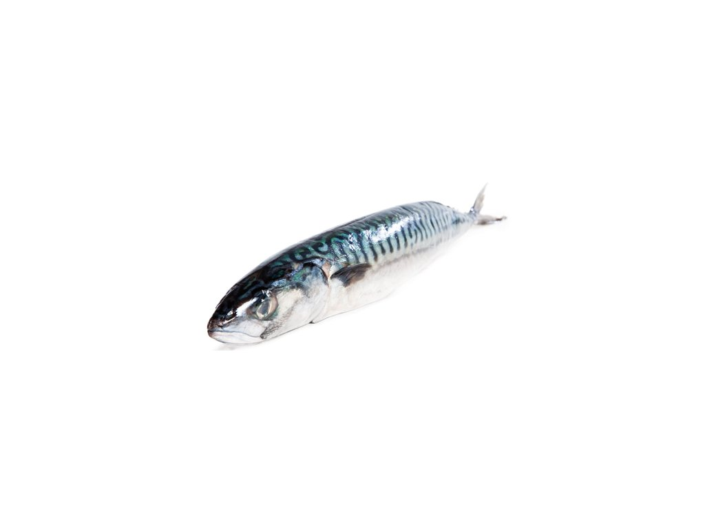 makrela sushi