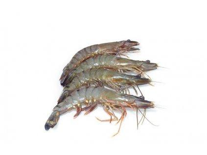 Čerstvé krevety