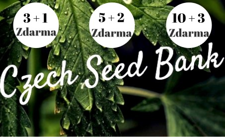 Czech Seed Bank | AKCE | Semenacannabis.cz