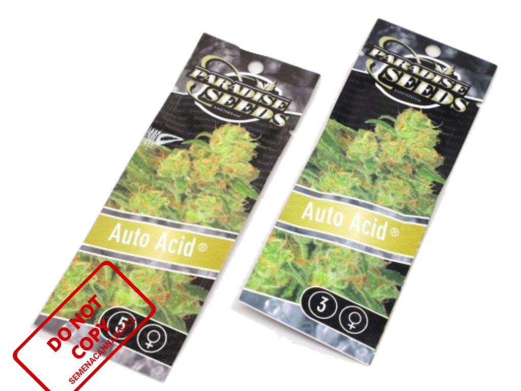 AUTO Acid | Paradise Seeds