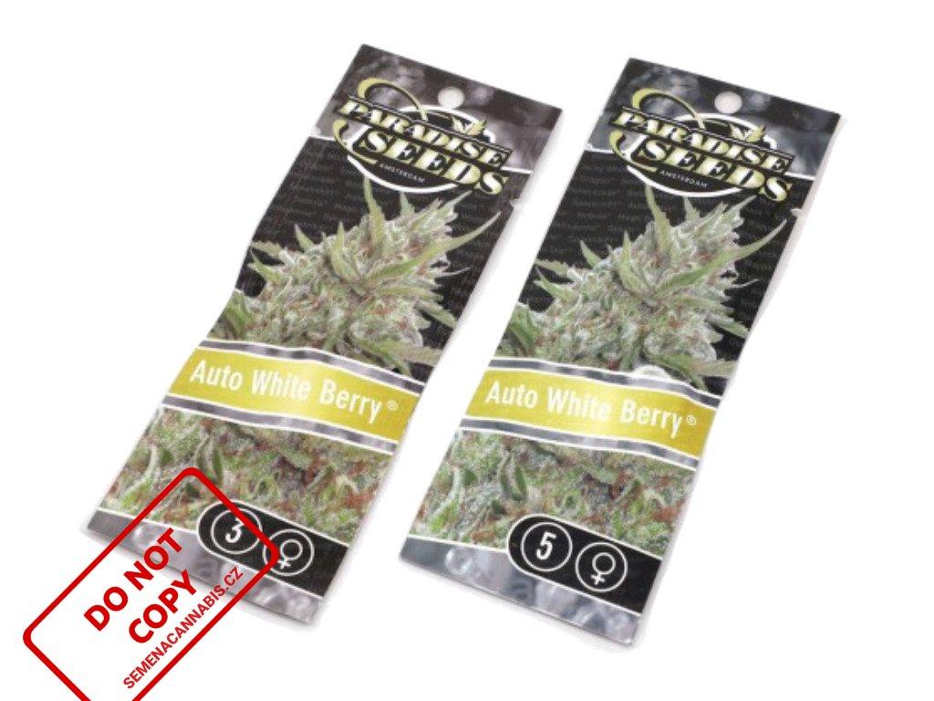 AUTO Whiteberry   Paradise Seeds