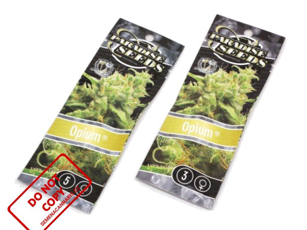 Opium   Paradise Seeds