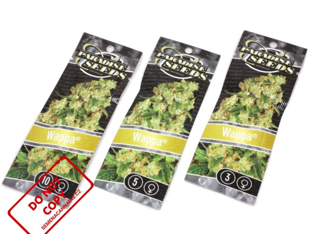Wappa   Paradise Seeds