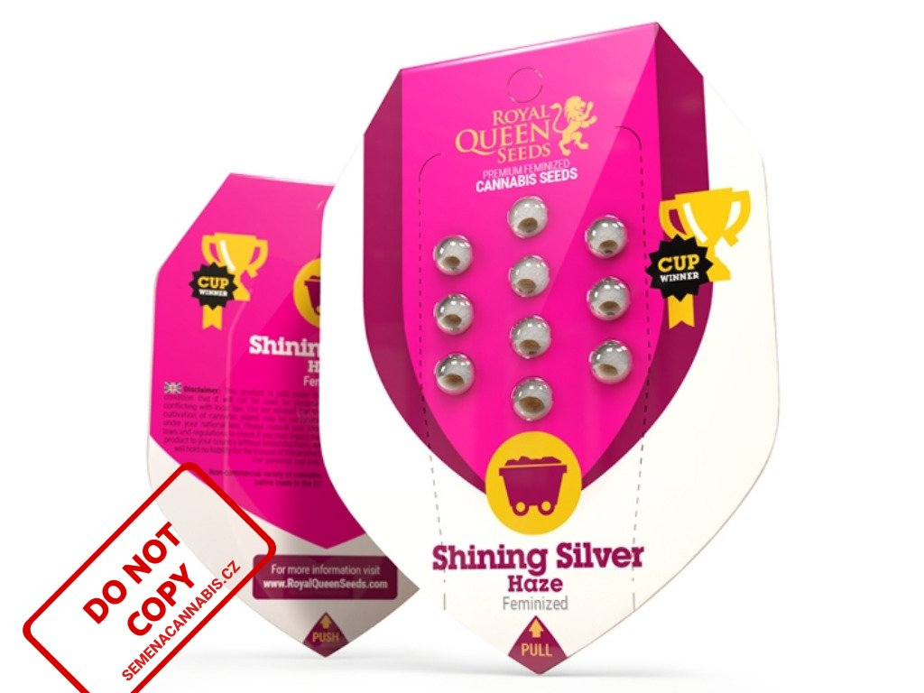Shining Silver Haze   Royal Queen Seeds