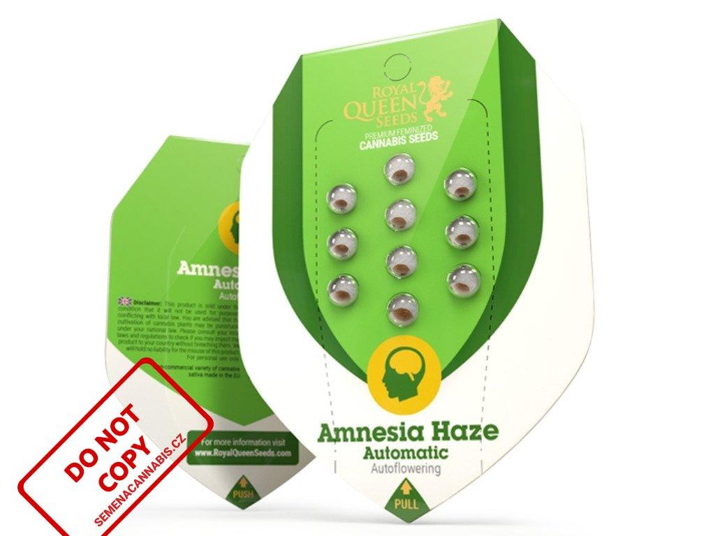 Amnesia Haze AUTO   Royal Queen Seeds
