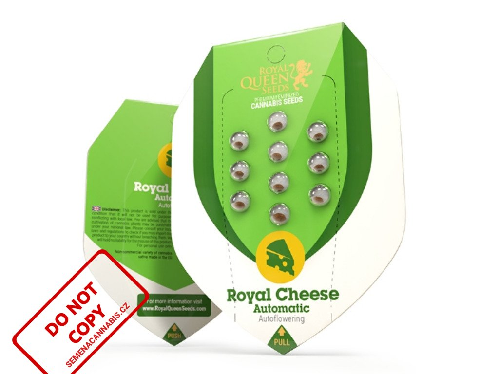Royal Cheese AUTO   Royal Queen Seeds