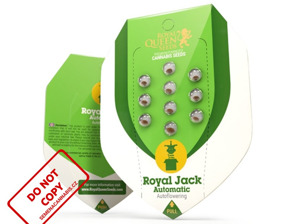 Royal Jack AUTO | Royal Queen Seeds