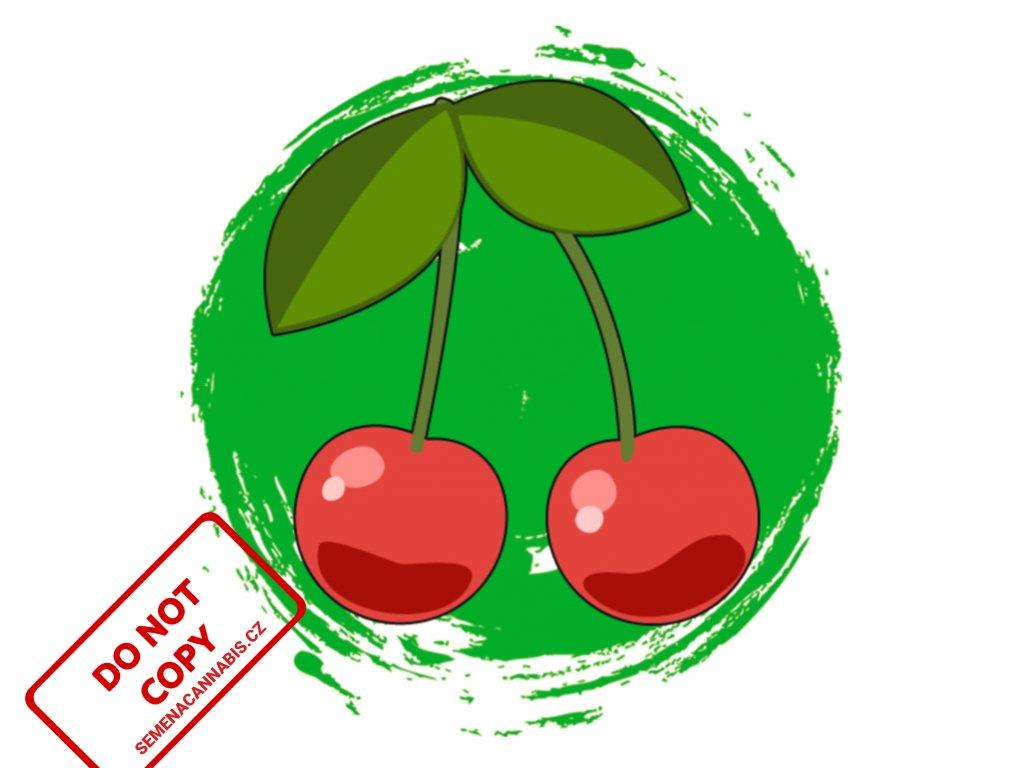 CBD Cherry Kush | Sumo Seeds