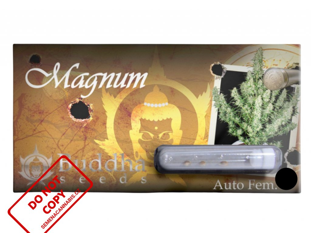 Magnum Auto   Buddha Seeds