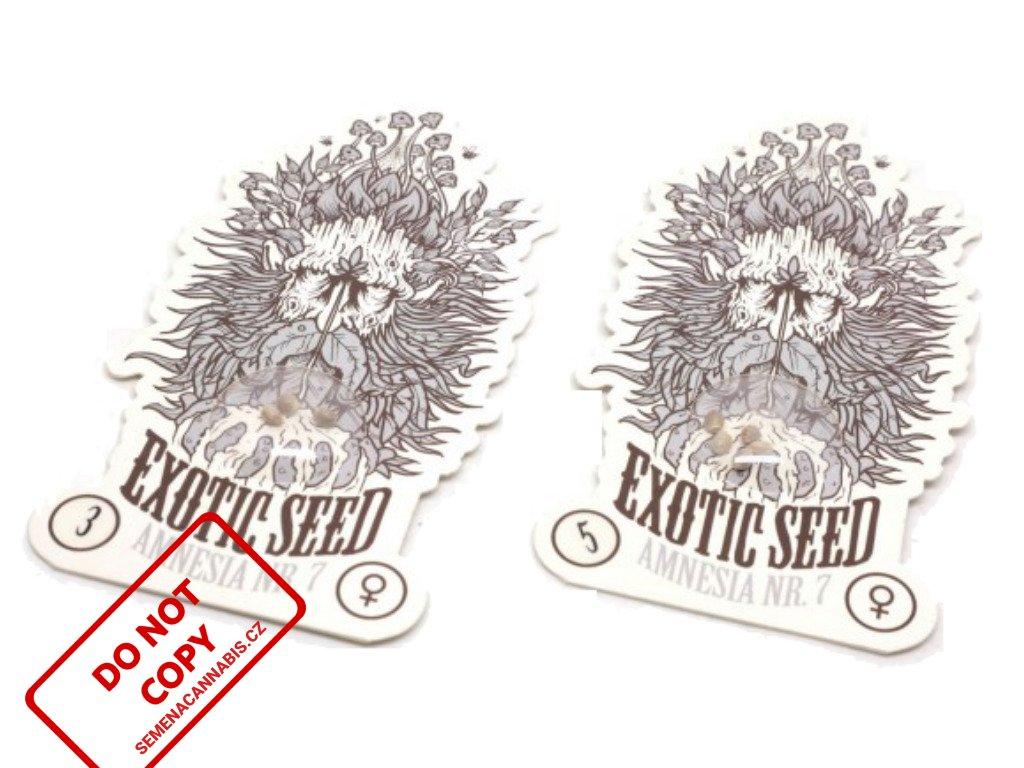 Amnesia #7   Exotic Seeds