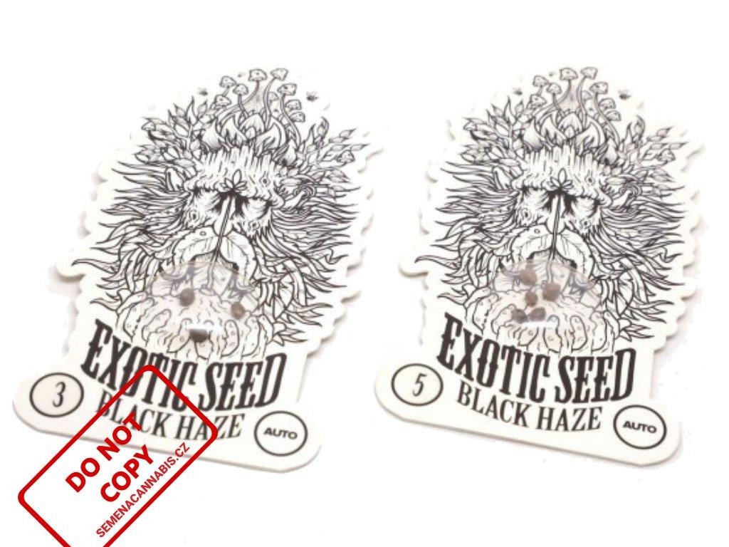 Black Haze Auto | Exotic Seeds