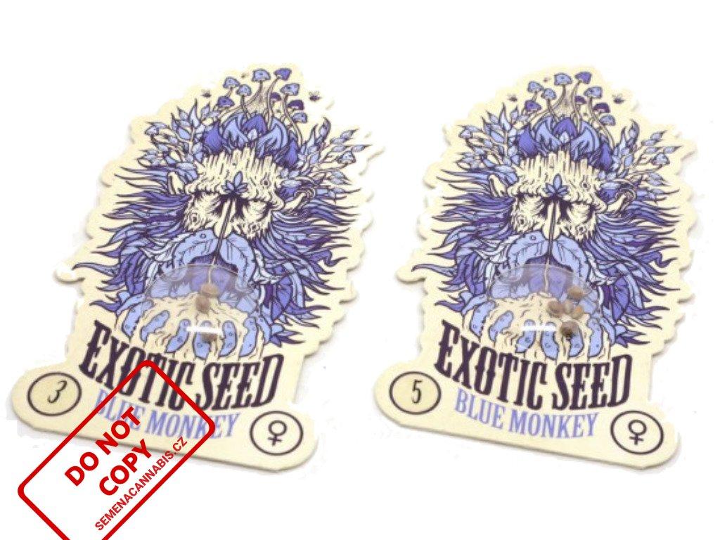 Blue Monkey   Exotic Seeds
