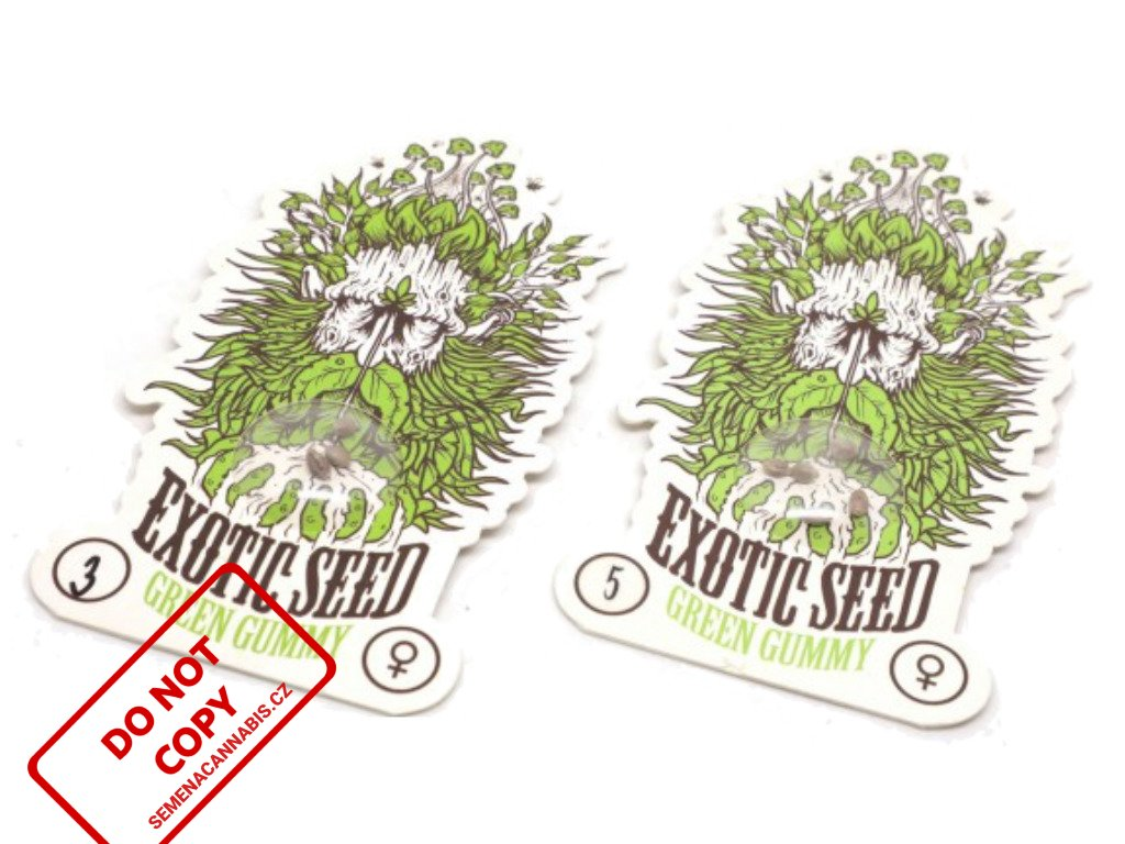 Green Gummy   Exotic Seeds