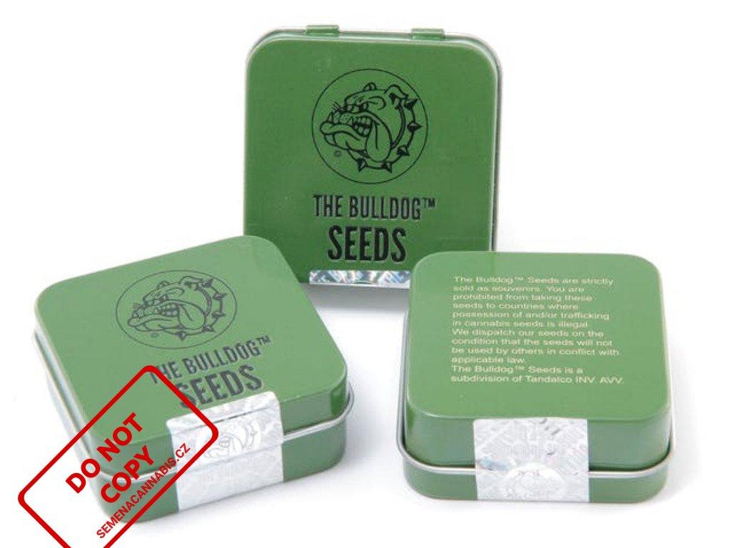 O.Z. Kush | The Bulldog Seeds