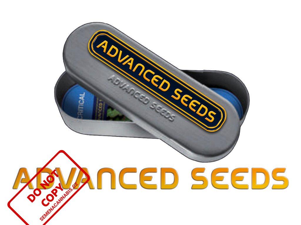Critical Soma   Advanced Seeds